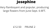 Josephine Very flamboyant and popular, producing large flowers from June-Sept. 6-8FT.    £12.50     PRUNE 2