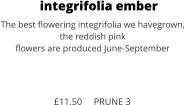 integrifolia ember The best flowering integrifolia we havegrown, the reddish pink  flowers are produced June-September    £11.50     PRUNE 3